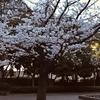 Spring has come -春は皆平等にやって来るんだ- 【今週のお題 「桜」】