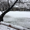 松本に初雪が降る
