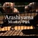 【京都vlog】子供と行く嵐山モンキーパーク!満足できる4つの理由