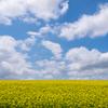 初夏の名寄市の風景~智恵文の菜の花畑・比翼の滝・晨光の滝【2020年6月撮影】