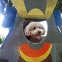 初めての犬を飼う不安を取り除くもっと素敵なブログ。