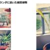 ペナンで育てる観葉植物たち