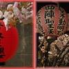 京の花見散歩 西陣の桜 part2