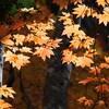 (2020.10.27)紅葉を求めて照葉峡へ!
