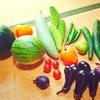 夏野菜の思い出