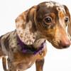 高齢者が飼ってはいけない犬種・飼いやすいオススメ犬種