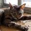 外猫、彼女のお話 ~猫宅のお話をしましょう(その 9)彼女とキキ、ララ、ムー~【野良猫/保護】