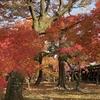通天橋に紅い雲海が広がる「東福寺」の美しい紅葉