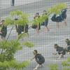 暑さに負けず 運動会の練習です。