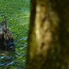 池のほとり Ⅱ