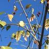 空も風景も、秋の気配が日に日に濃くなっていく