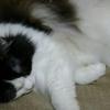 猫草のこと。