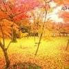 京都行きたいな行きたいなーって!