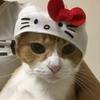 2019.08.26~猫のかぶりもの
