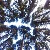 第302回blog♪日頃木陰が多いと思ってたけど。