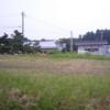 今日の田んぼ(゚∀゚)37