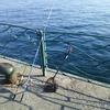 初釣りは・・・福?