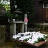 きゅうりが病の身代わりに 京都のきゅうり封じ