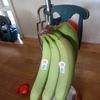 バナナが熟れないことってあるの!? グリーンバナナの食べ方