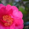 730  冬を告げる花