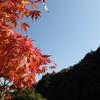紅葉がとても綺麗です