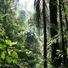 地球温暖化を防ぐ東南アジアの熱帯雨林