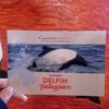【アルゼンチン】トレレウからパンダイルカを見る方法やツアーの行き方を紹介