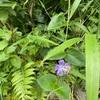 より多くの光を求めて葉は伸びる中、花は力強く咲く