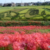 咲き誇る彼岸花と「ごんぎつね」 ― 矢勝川沿いの300万本の彼岸花(その1) ―