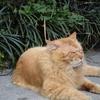 エジプト 猫