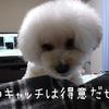 ~愛犬のおやつキャッチ~