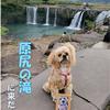【わんこと旅】 原尻の滝 ≪大分県≫