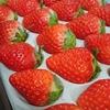 【ふるさと納税】佐賀むらおか農園の王様のイチゴがおいしかった件