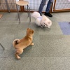 犬同士の関係