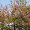 ラーメンフェスタ IN NAKAYAMA 桜散りはじめても開催中