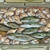 日本海釣行~! エサ釣りメインで遊んできました👍  【  釣り過ぎに注意💧  】