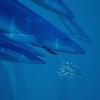 ゲームレビュー:ABZÛ 海の中をゆっくりと泳ぎ、触れることのできる水族館のようなゲーム
