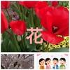 「今日の花」(春の花)