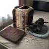 猫のお家を室内干しする事になった訳