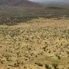 壮大な大地に生息するサンブルファイブ全てに会えた! ケニア冒険記
