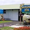 ハワイ島ハネムーン①マカダミアナッツ工場の見学