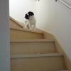 祝!小さいお姫ちゃん階段おりられるようになったね♪