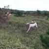 水溜りができた野原を追いかけっこ