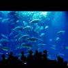ぐるっとパスを使って葛西臨海水族園へ行ってきた【2017.09.09】