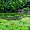 柿田川  旅路の情景