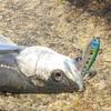 【ルアー用スナップ要注意】釣り場でルアーをロストする危険性について。