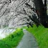 岡崎で桜のプチ撮影会