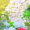 陽春の候(鶴岡八幡宮神苑ぼたん庭園から)