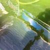 屋外飼育のらんちゅうの水、汚れる