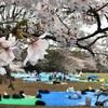 【お花見】代々木公園 場所取り状況 (2019/3/30) 〜いいトコは満席です!